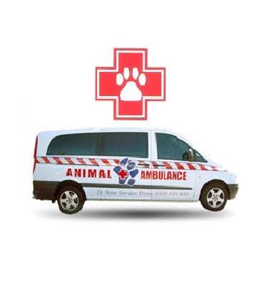 تصویر از اورژانس دامپزشکی شیراز – اورژانس حیوانات شیراز