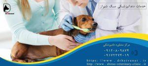 جرم گیری دندان سگ شیراز