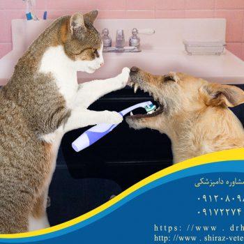 جرم گیری دندان سگ و گربه شیراز