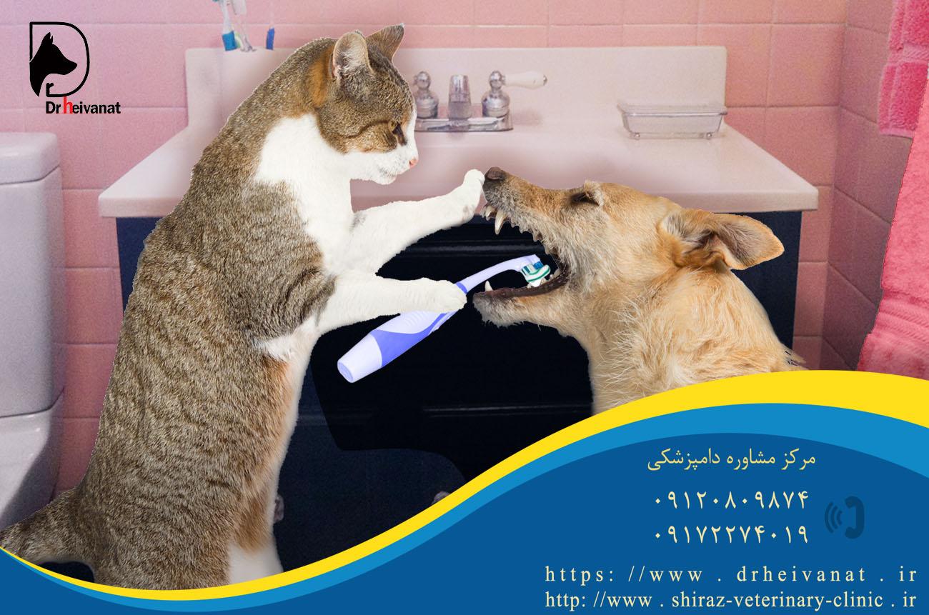 Photo of جرم گیری دندان سگ و گربه شیراز و دندانپزشکی سگ و گربه شیراز