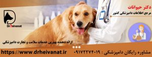 دامپزشکی سگ شیراز