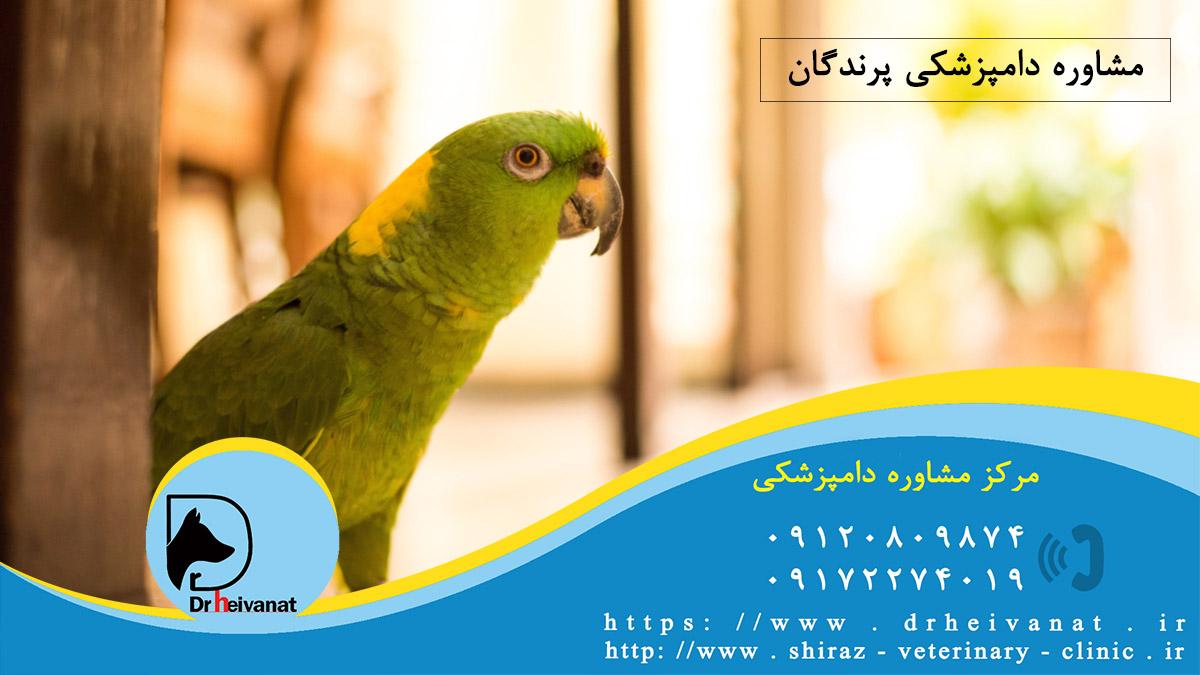 تصویر از بهترین دامپزشکی پرندگان در شیراز