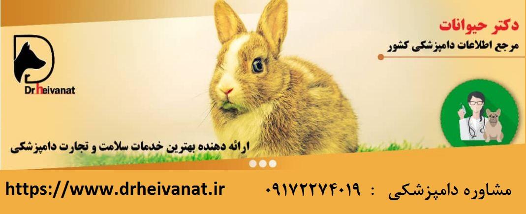 دامپزشک خرگوش شیراز