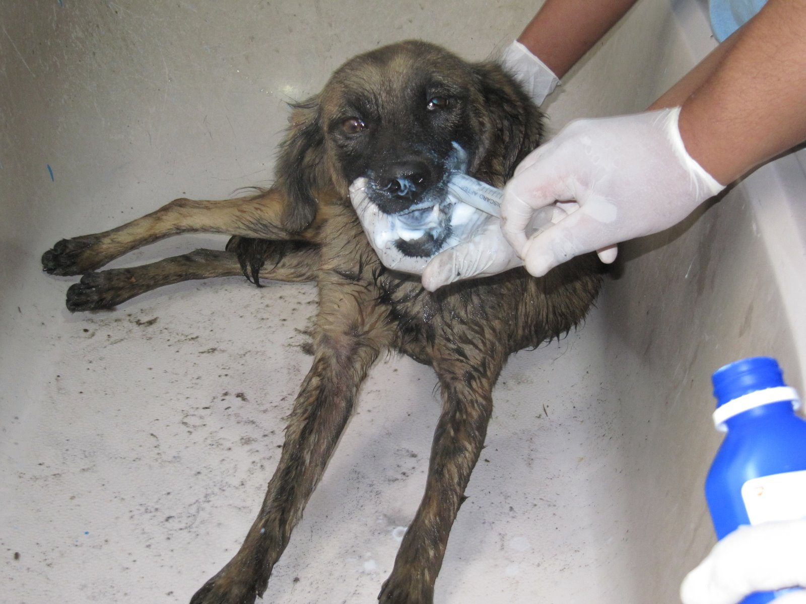 Photo of نحوه درمان سگ مسموم