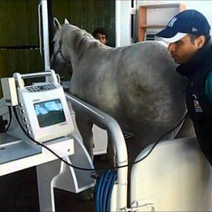سونوگرافی اسب در شیراز یزد اصفهان و…