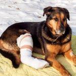 شکستگی پای سگ