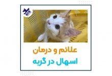 تصویر از علائم اسهال گربه +درمان اسهال در خانه 🐱