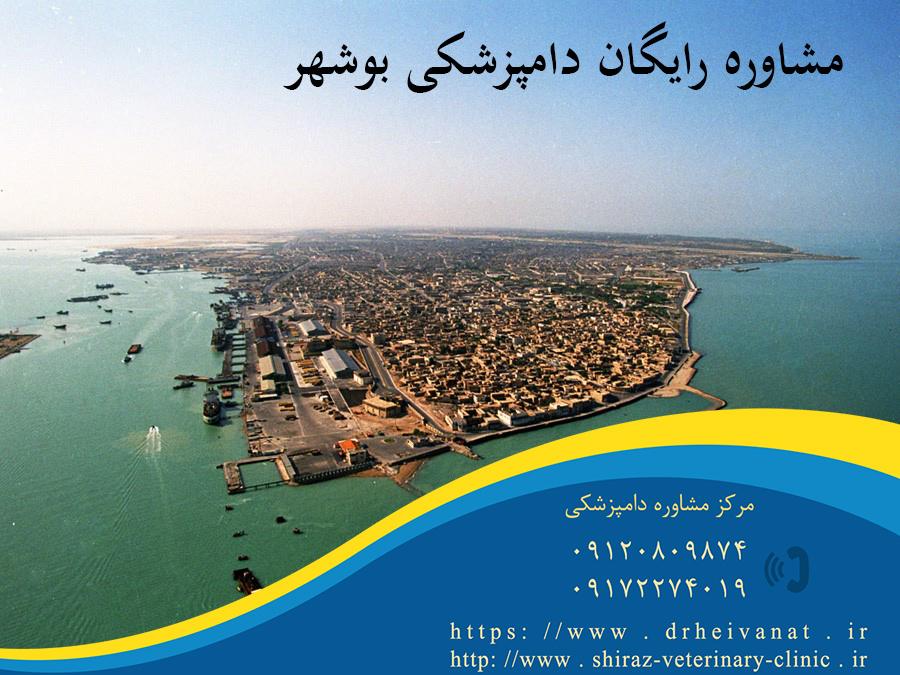 Photo of مشاوره تلفنی دامپزشکی بوشهر