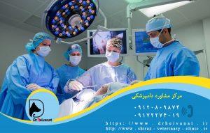 مشاوره دامپزشکی بیمارستان دامپزشکی شیراز