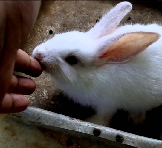 Photo of چرا خرگوش ها گاز می گیرند
