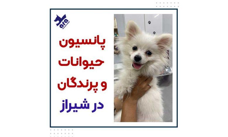 پانسیون حیوانات و پرندگان در شیراز