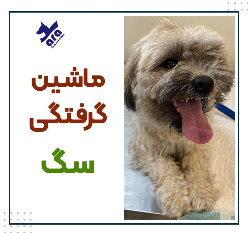 ماشین گرفتگی سگ و را های درمان آن