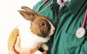 عقیم سازی خرگوش در یزد