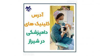 تصویر از آدرس کلینیک های دامپزشکی در شیراز + شماره تماس 📞