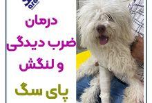 تصویر از درمان ضرب دیدگی پای سگ + راه های درمان لنگش سگ 🐾