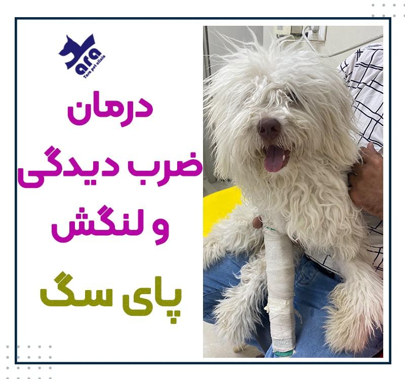 درمان ضرب دیدگی و لنگش پای سگ
