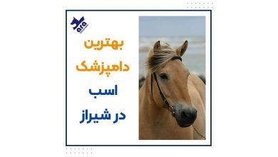 تصویر از درمان بیماری های اسب + بهترین دامپزشک اسب شیراز و اصفهان 🐎