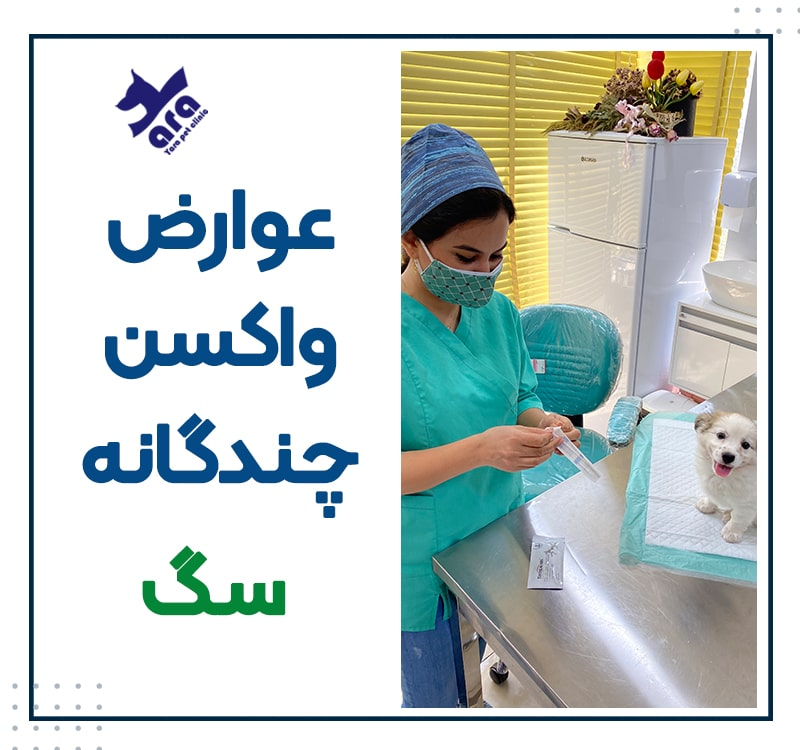 عوارض واکسن چندگانه سگ