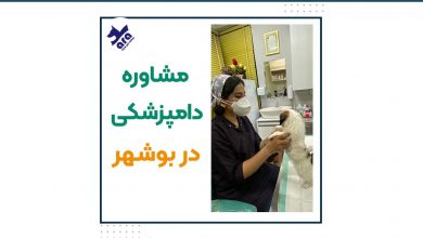 تصویر از دامپزشکی بوشهر + مشاوره دامپزشکی شبانه روزی در بوشهر