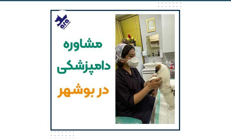 مشاوره دامپزشکی در بوشهر