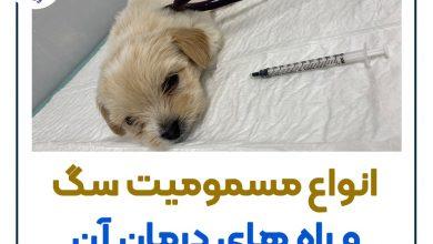 تصویر از مسمومیت سگ +موثرترین راه های درمان 🐾 🐶