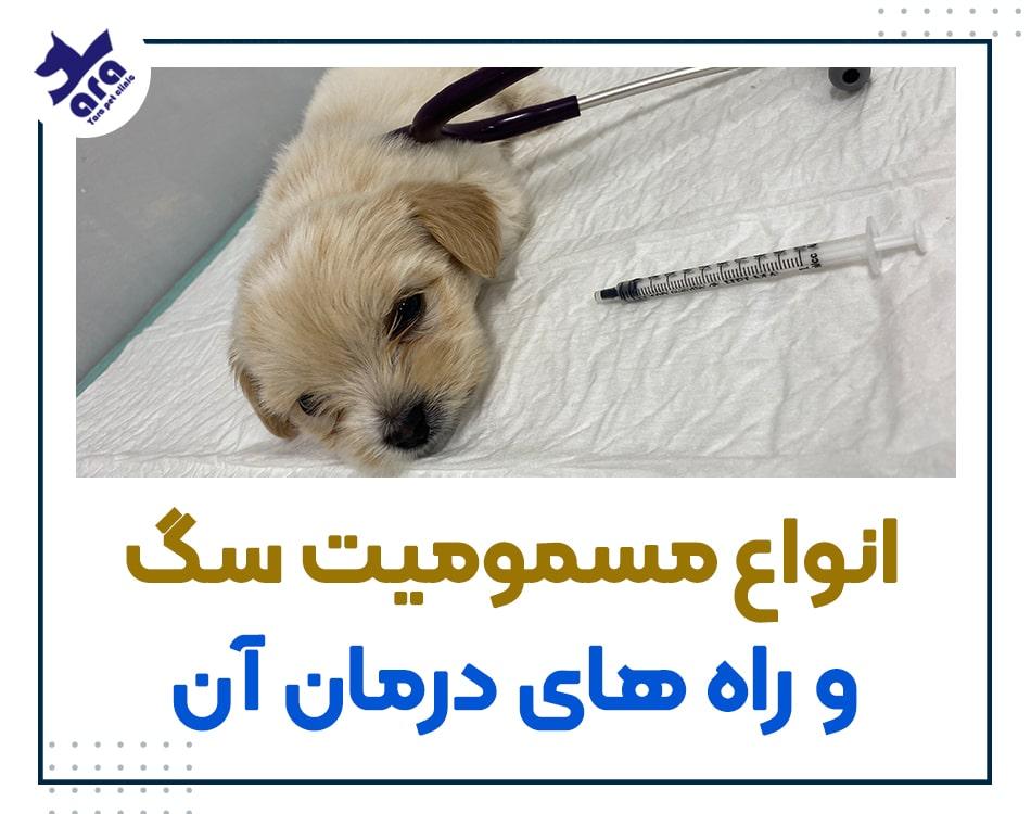 انواع مسمومیت سگ و راه های درمان آن