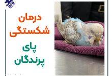 تصویر از درمان شکستگی پای پرندگان : آتل بندی پای پرنده + ۶مرحله اورژانسی