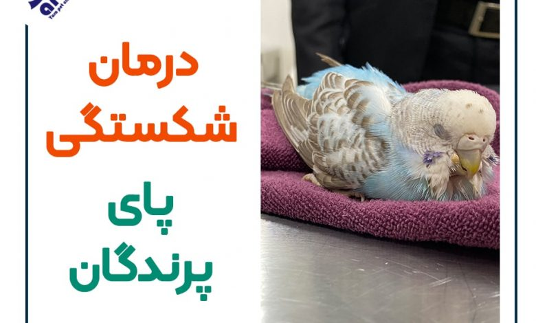 درمان شکستگی پای پرندگان
