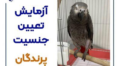 تصویر از هزینه آزمایش تعیین جنسیت پرنده + تعیین جنسیت کاسکو 🐦