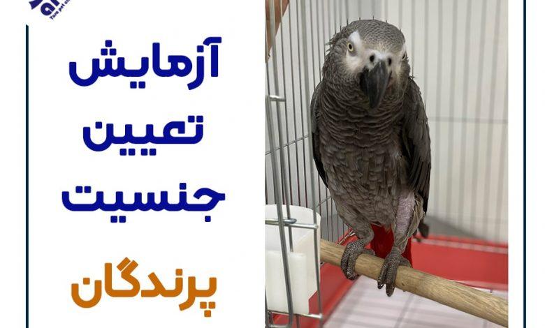 هزینه آزمایش تعیین جنسیت پرندگان