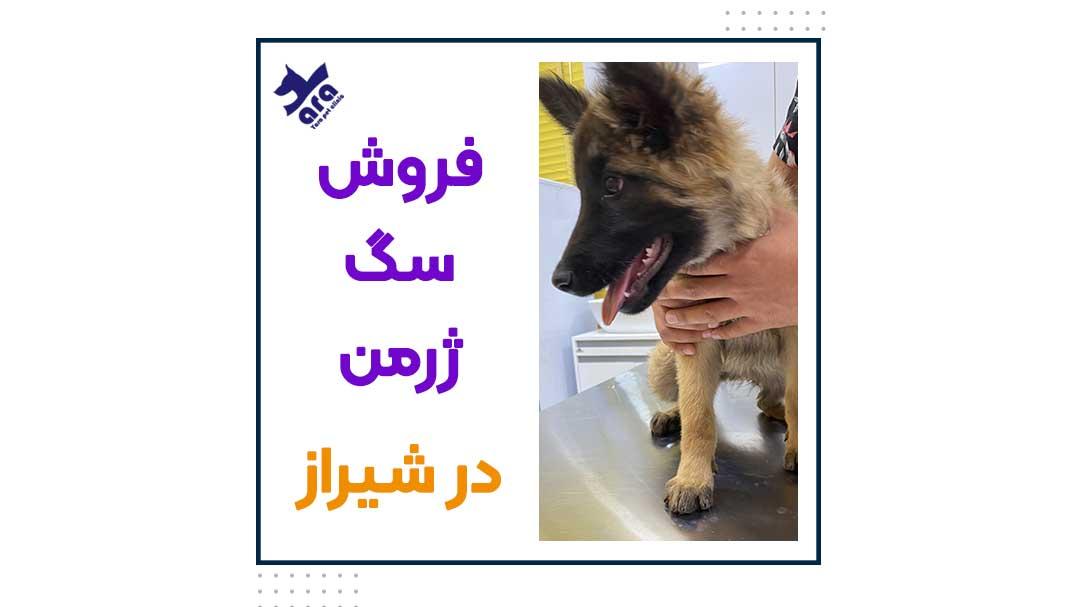 فروش سگ ژرمن در شیراز