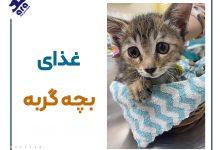 تصویر از غذای بچه گربه : از شیر خواری بچه گربه تا ۳ ماهگی 🐱