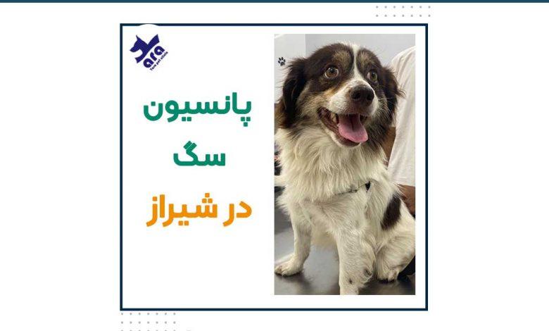 پانسیون سگ در شیراز