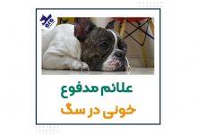 تصویر از علت مدفوع خونی سگ : ۷ علت بیماری + درمان 🐶