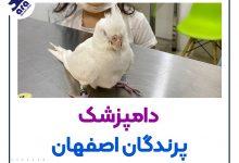تصویر از دامپزشک پرندگان اصفهان+ بهترین کلینیک پرندگان اصفهان 🐤