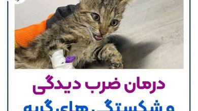 تصویر از درمان شکستگی ها در گربه + نکات جابه جایی گربه صدمه دیده 🐱