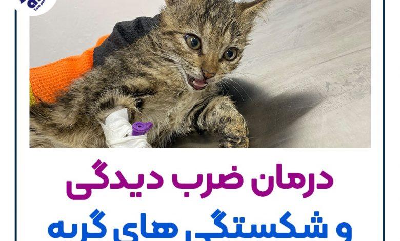 درمان ضرب دیدگی و شکستگی های گربه