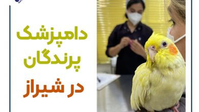 تصویر از دامپزشکی پرندگان شیراز (کلینیک طیور) :مشاوره تلفنی+آدرس
