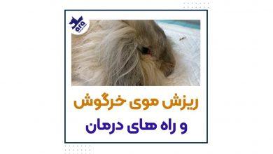 تصویر از علت ریزش موی خرگوش +درمان 🐰