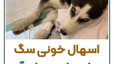 تصویر از اسهال خونی در سگ : علت بیماری و راه های جلوگیری + ۹مرحله درمان