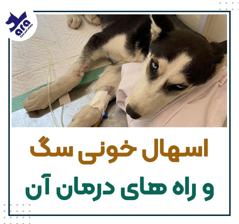 اسهال خونی سگ و راه های درمان آن