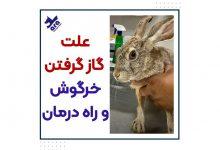 تصویر از علت گازگرفتن خرگوش+ راه درمان 🐰