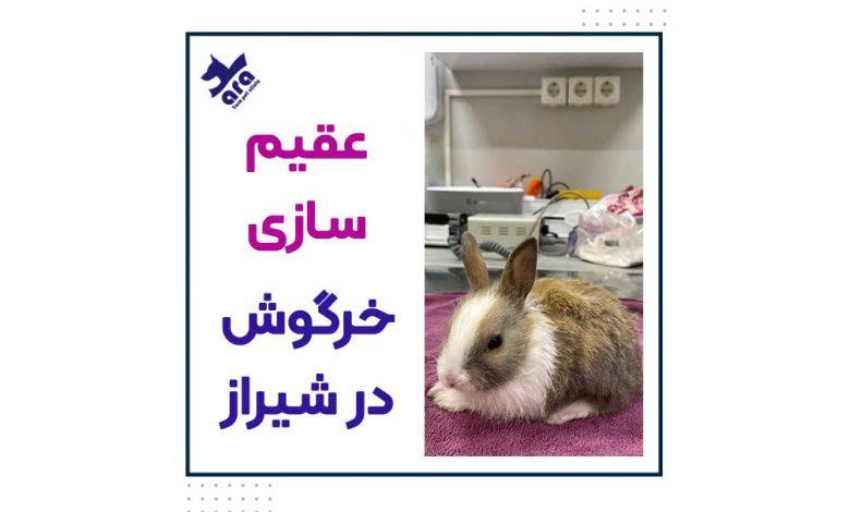 عقیم سازی خرگوش در شیراز
