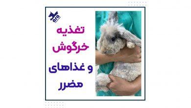 تصویر از نکات تغذیه ای خرگوش + لیست غذاهای مضرر