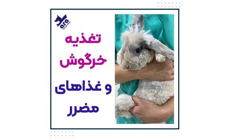 تغذیه خرگوش و لیست غذاهای مضرر