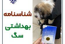 تصویر از صدور شناسنامه سگ شیراز + صدور با مهر دامپزشک 🐾