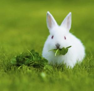 غذای خرگوش چیست؟