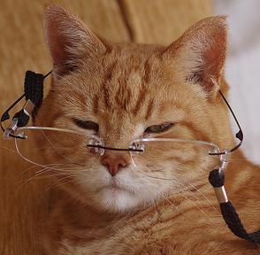 تصویر از تشخیص سن گربه