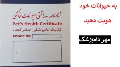 تصویر از هزینه شناسنامه سگ شیراز : صدور با مهر دامپزشک ۳۰ هزارتومان