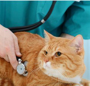 تصویر از بهترین دامپزشک متخصص بیماری های گربه در شیراز یزد تهران مشهد یاسوج بوشهر شهرکرد